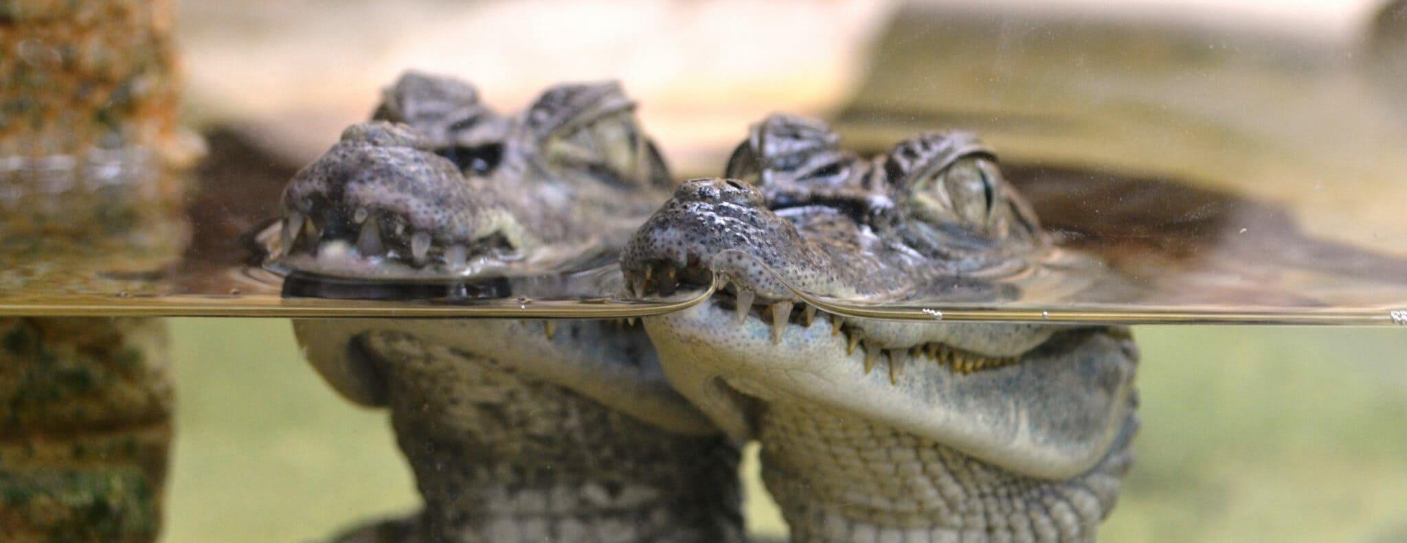 La ferme aux crocodiles de Pierrelatte